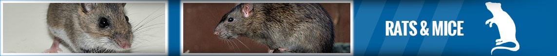 banner-rats